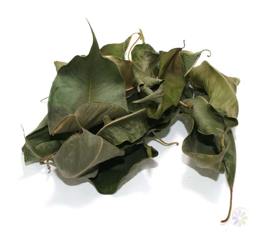 Купить фикуса лист сушеный цельный