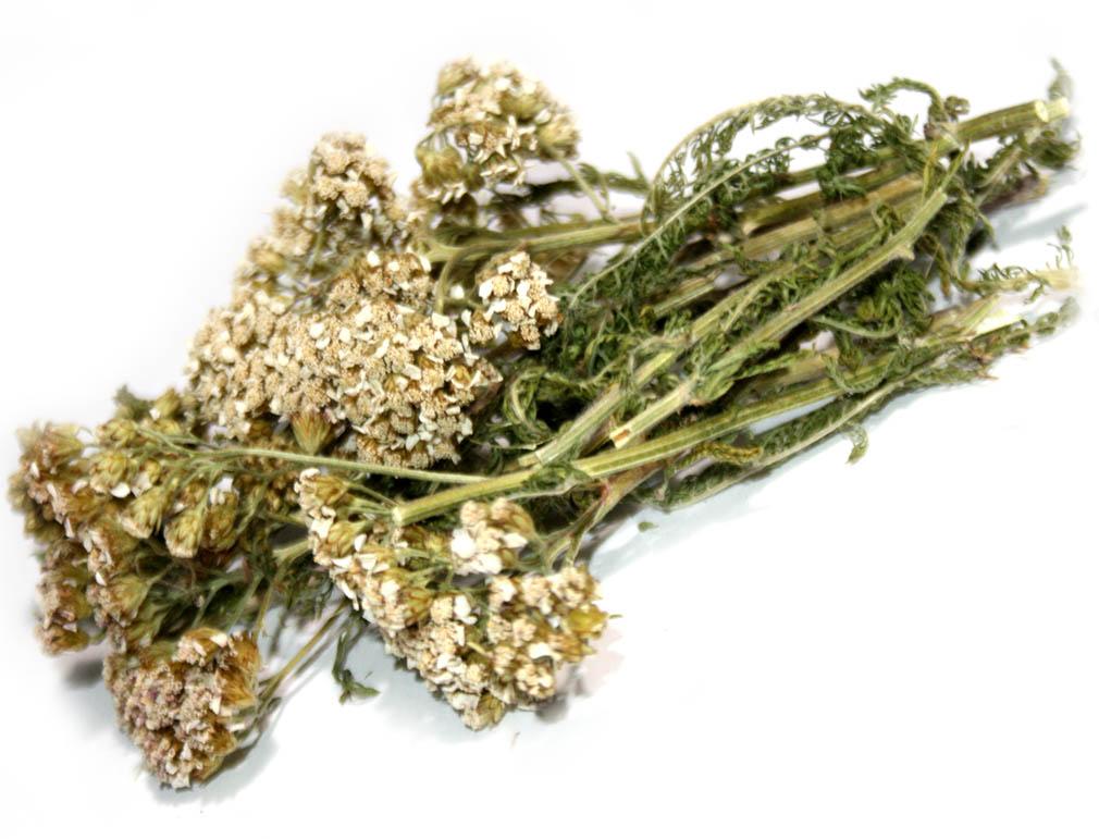 Купить тысячелистник цветки и трава