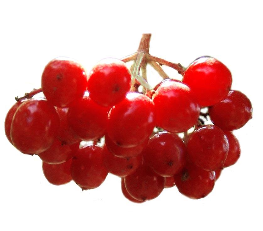 Купить ягоды калины